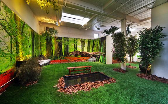 Indoor Dog Park Nyc